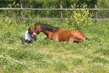 horse-coaching